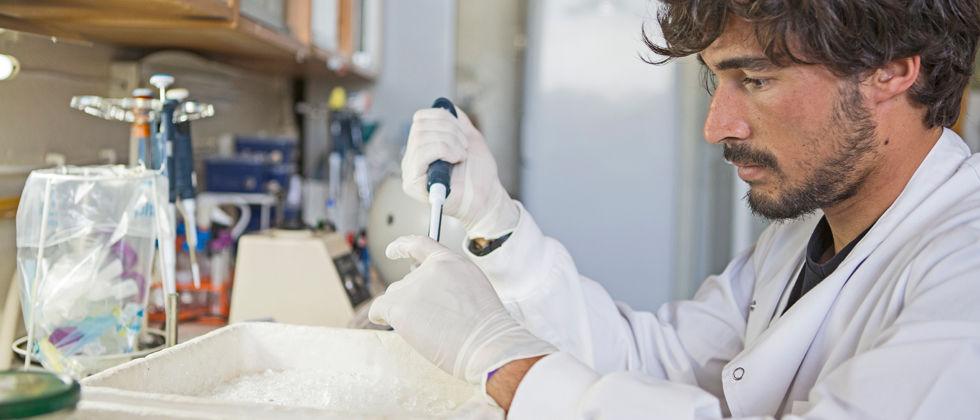 Oito milhões de euros em bolsas europeias para cinco cientistas em Portugal