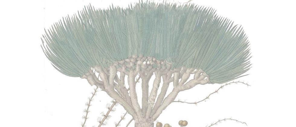 Curso de Guias do Jardim Botânico da Ajuda