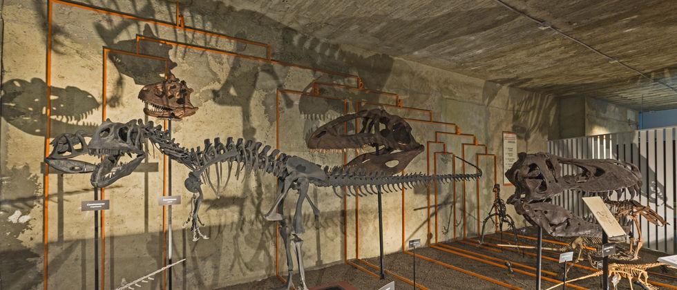 Exposição no Museu Nacional de História Natural e da Ciência
