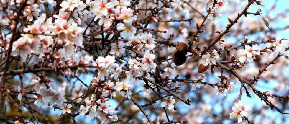 ISA recebe jornadas técnico-científicas sobre amendoal super eficiente