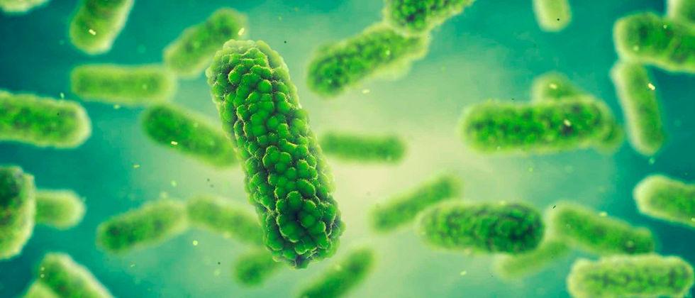 Dia Internacional do Microorganismo no Instituto Superior Técnico