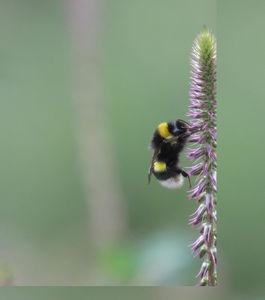 World bee day: A ciência das abelhas