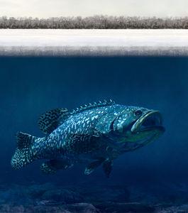 Os peixes do pólo Norte: porque não morrem congelados?