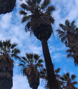Plantas à Mesa | Peddy paper no Jardim Botânico Tropical