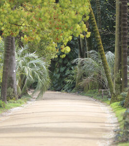 Visita Noturna ao Jardim Botânico de Lisboa