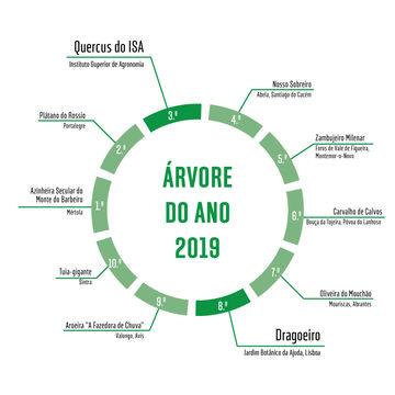 Árvore do Ano 2019 | Vencedores